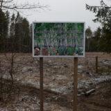 Contaminated forest near Novozybkov